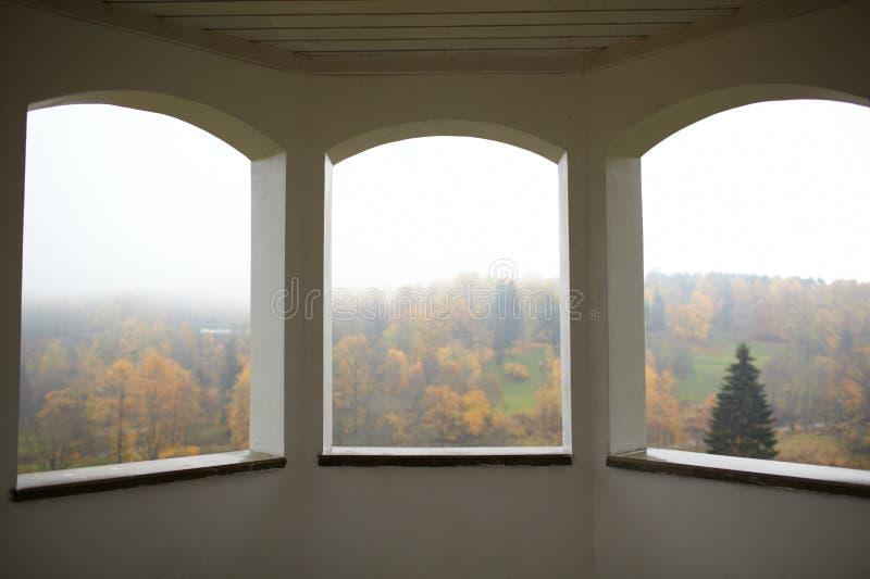 Het bos en de mist van de herfst. stock afbeeldingen