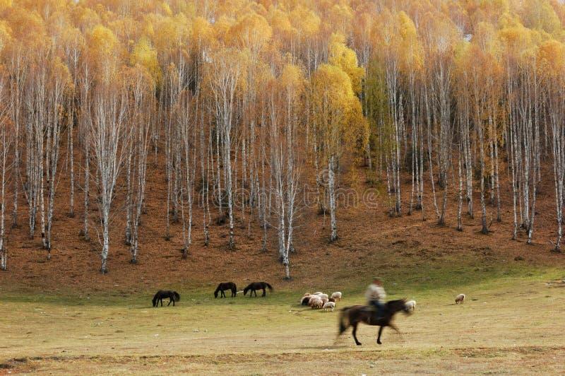 Het Bos en de Veehoeder van de berk royalty-vrije stock afbeeldingen