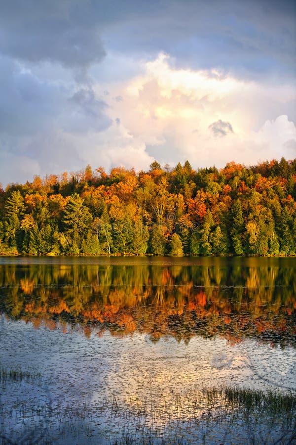 Het bos en het meer van de daling royalty-vrije stock afbeelding