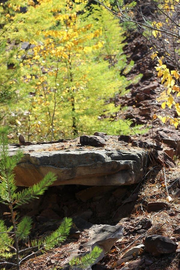 Het bos groeit op stenen royalty-vrije stock foto's