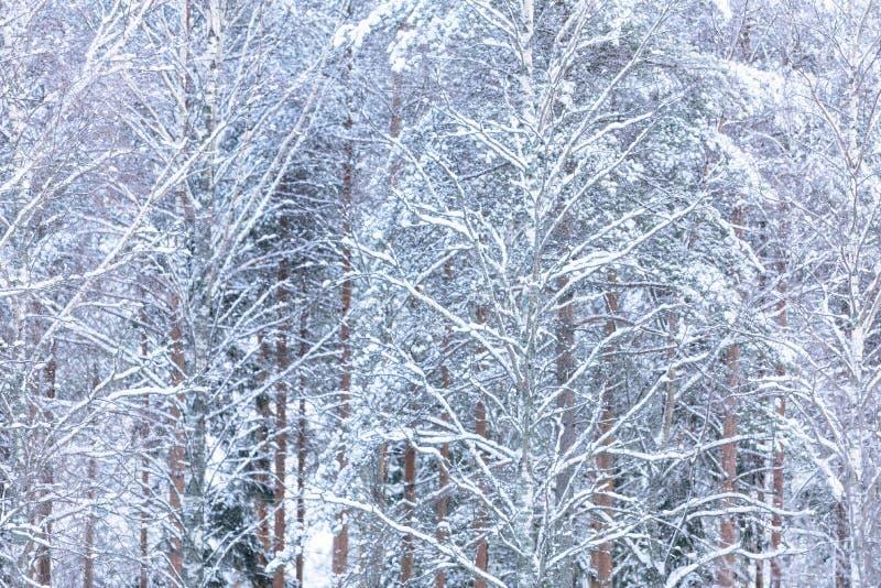Het bos heeft met zware sneeuw in wintertijd in Lapland, Finland behandeld stock afbeelding