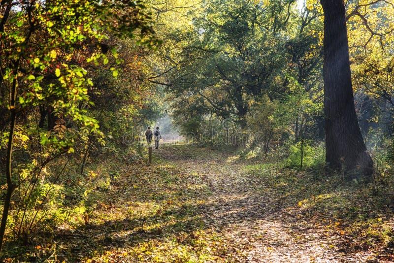 Het bos lopen stock foto