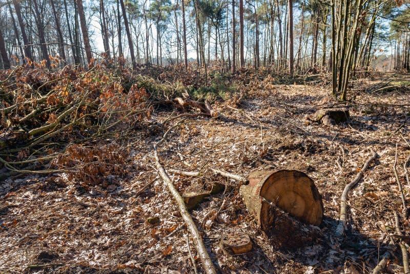 Het bos na het felling van de bomen stock foto's