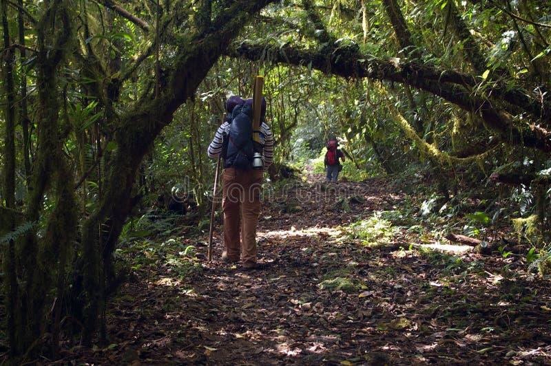 Download Het Bos Tweepersoons Lopen Van Honduras In Het Midden Van De Dag Redactionele Afbeelding - Afbeelding bestaande uit kampeerauto, weinig: 107706955