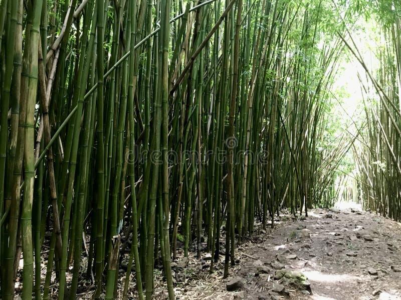 Het Bos van het bamboe op Maui stock fotografie