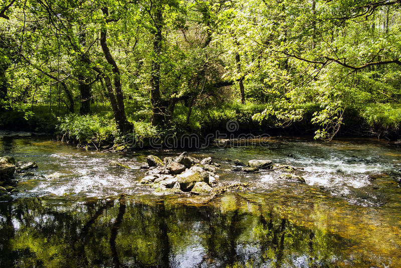 Het bos van Cornwall royalty-vrije stock afbeeldingen