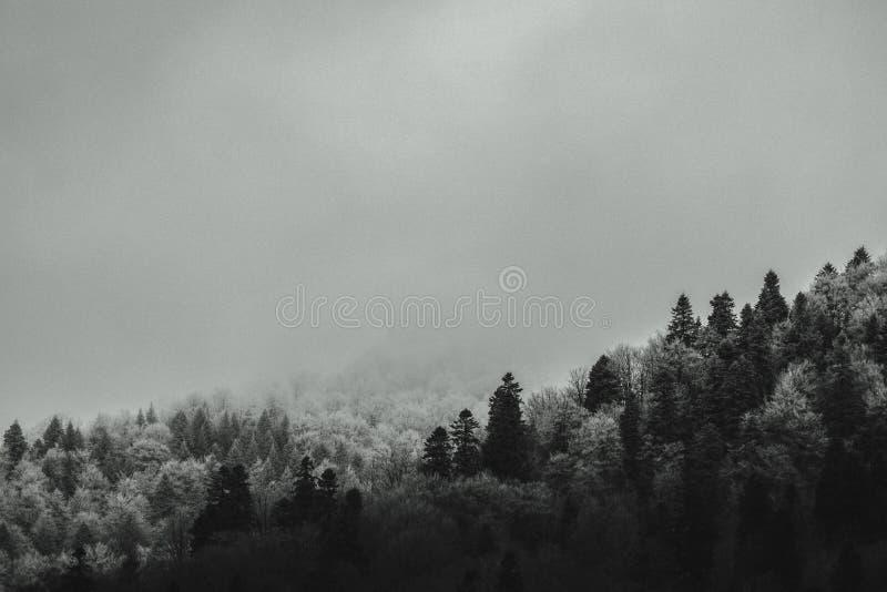 Het bos van de basisberg in ochtendmist die wordt behandeld stock afbeeldingen
