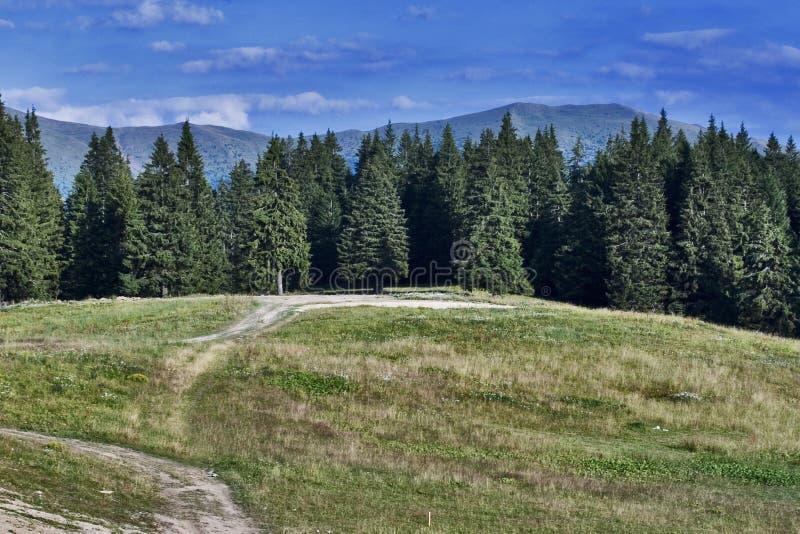 Het bos van de berg royalty-vrije stock foto's