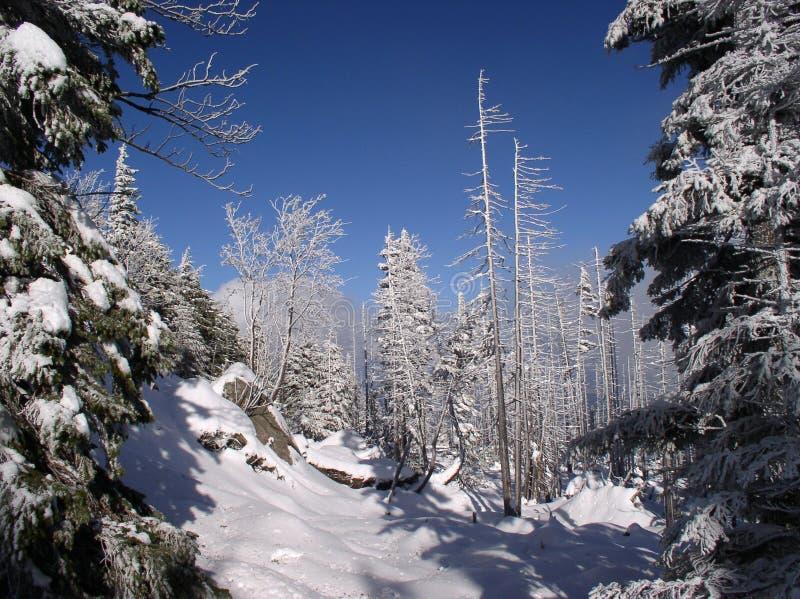 Download Het bos van de berg stock foto. Afbeelding bestaande uit winter - 46108