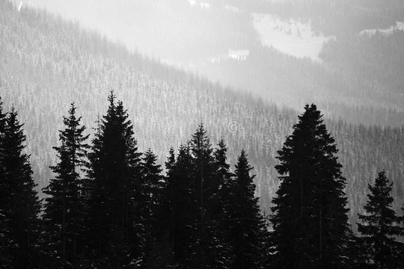 Het bos van de berg stock foto