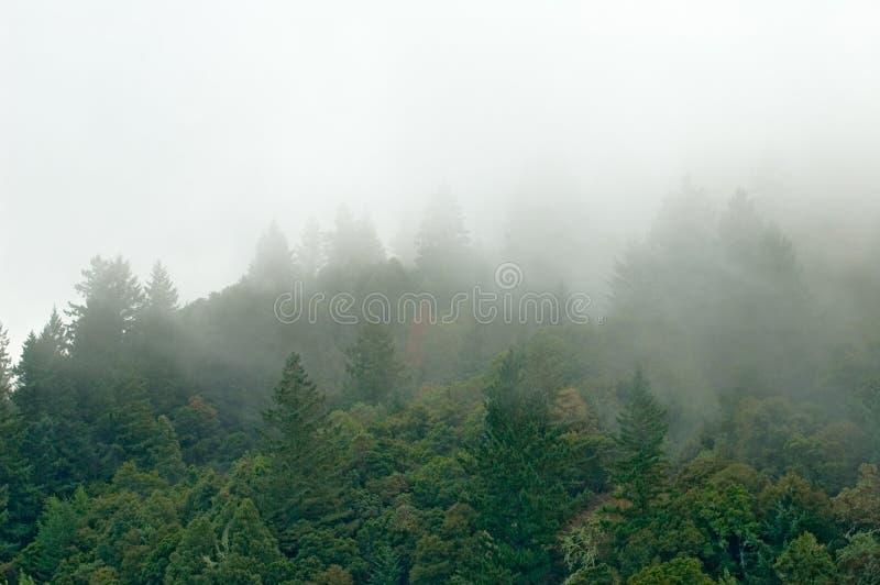 Het bos van de berg in wolken stock fotografie