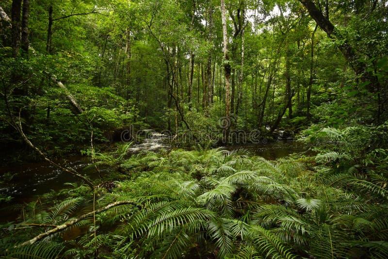 Het bos van de boomvaren stock foto's