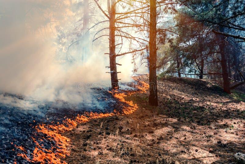 het bos van de brandbrandwond stock afbeelding