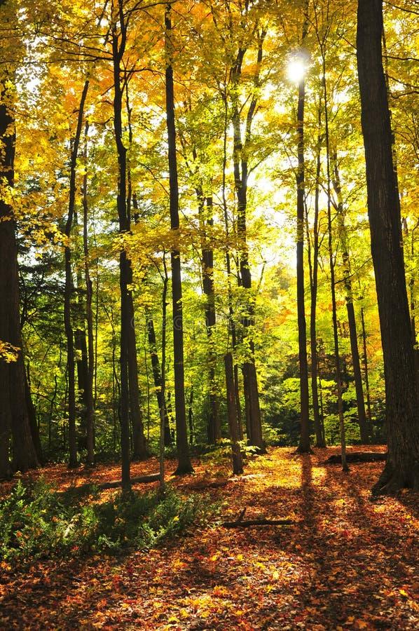 Het bos van de daling stock foto
