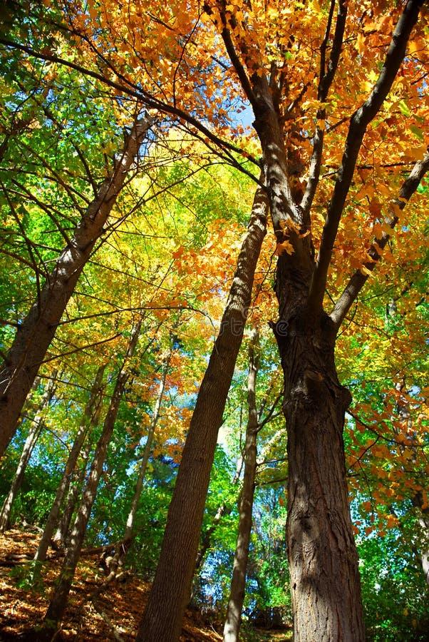 Het bos van de daling stock foto's