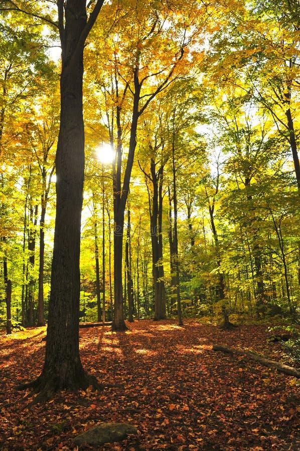 Het bos van de daling royalty-vrije stock afbeeldingen