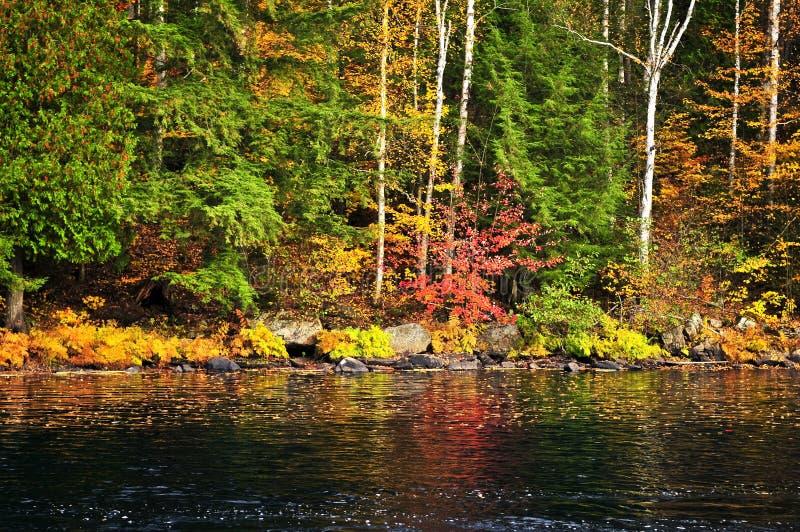Het bos van de daling en meerkust royalty-vrije stock fotografie