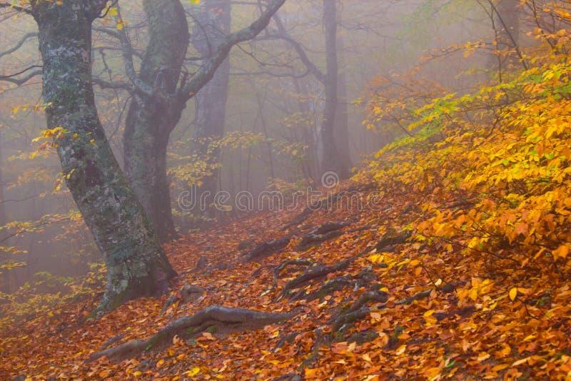 Het bos van de de herfstbeuk royalty-vrije stock foto's