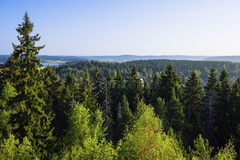 Het bos van de de zomerspar en meerlandschap & x28; Karelië, Russia& x29; stock fotografie