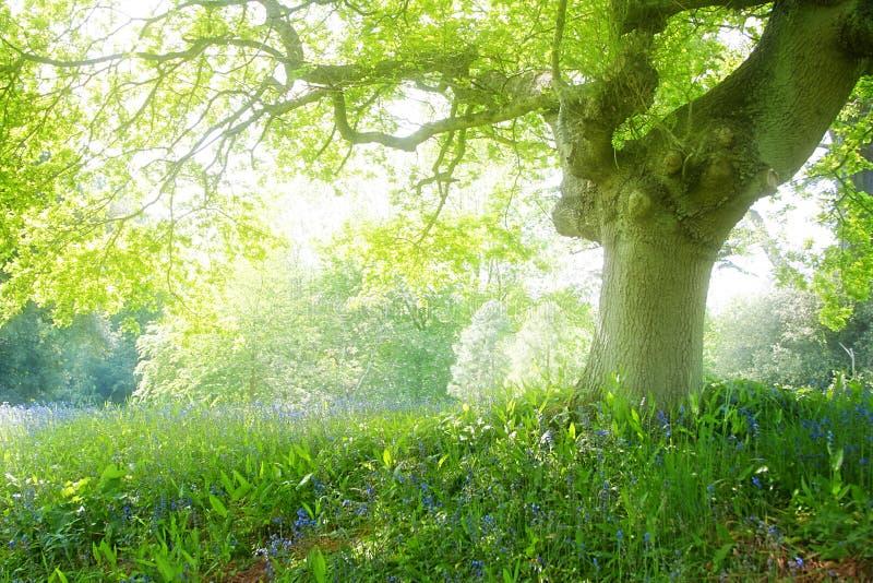 Het bos van de droom stock afbeeldingen