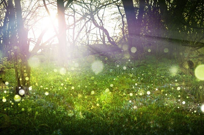 Het Bos van de fantasie stock fotografie