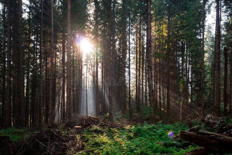 Het Bos van de fee royalty-vrije stock fotografie