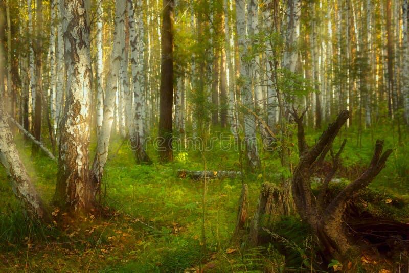 Het bos van de fee royalty-vrije stock afbeeldingen