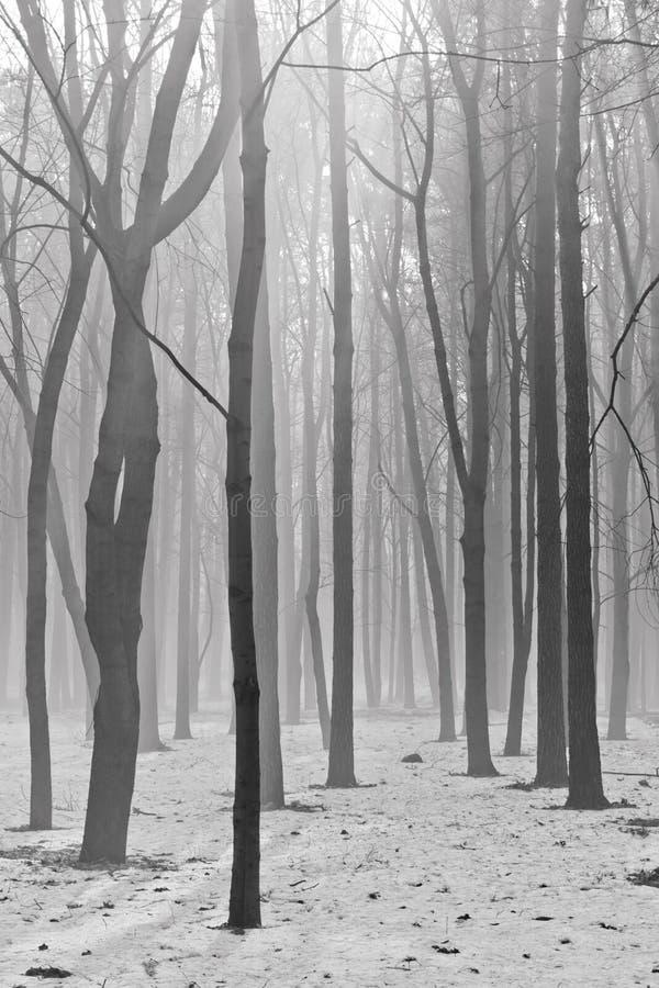 Het bos van de geheimzinnigheid stock foto