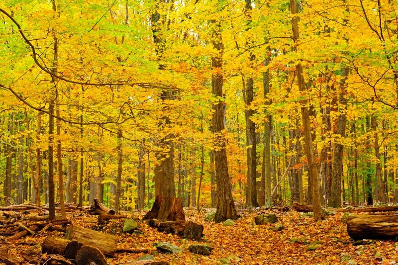 Het Bos van de herfst stock afbeelding