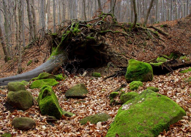 Download Het bos van de herfst stock afbeelding. Afbeelding bestaande uit seizoen - 29029