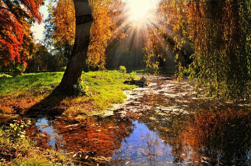 Het bos van de herfst bij zonsondergang. royalty-vrije stock foto's