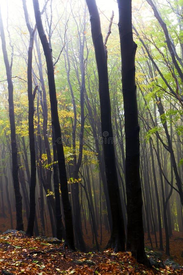 Het bos van de herfst in de mist. stock afbeelding