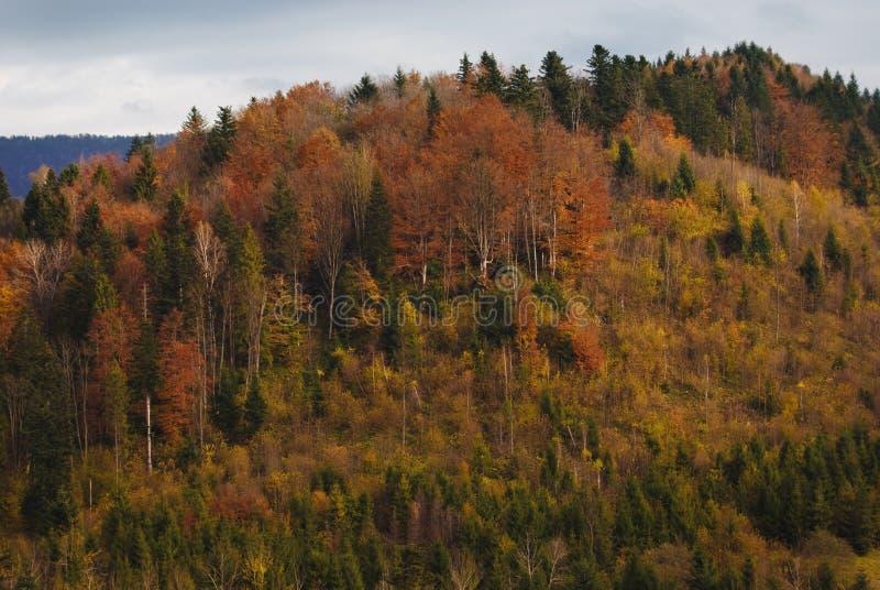 Het bos van de herfst op berg stock afbeelding
