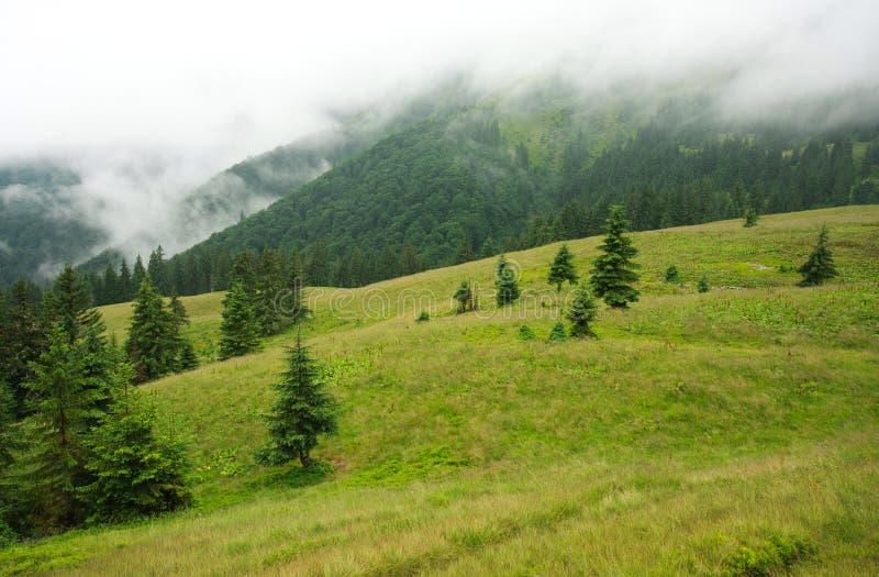 Het bos van de landschapsberg op een regenachtige die dag in mist wordt behandeld royalty-vrije stock foto