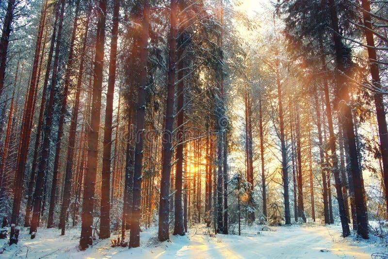 Het bos van de landschapssneeuw in de winter royalty-vrije stock afbeeldingen