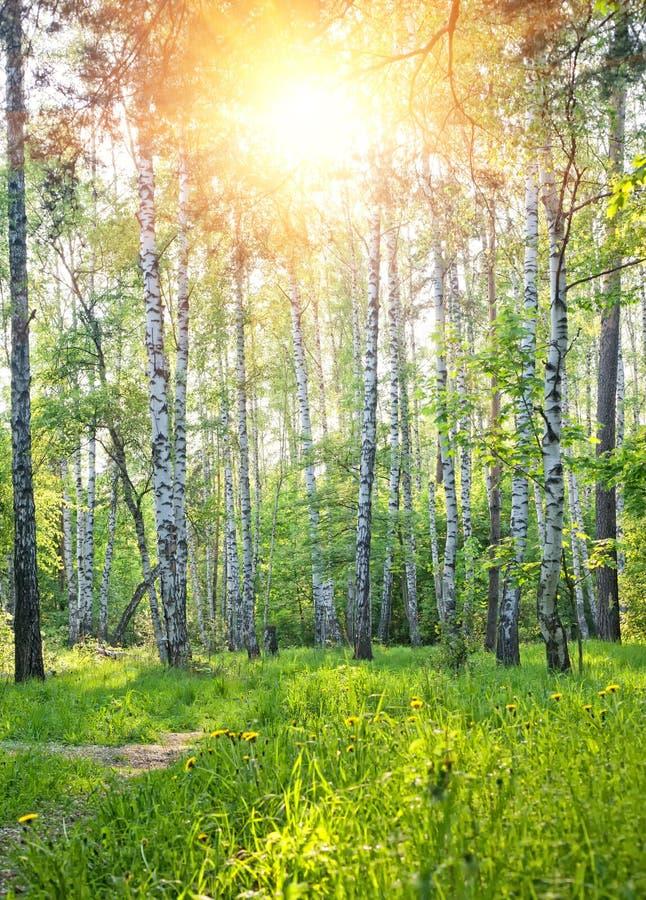 Het bos van de lente royalty-vrije stock foto