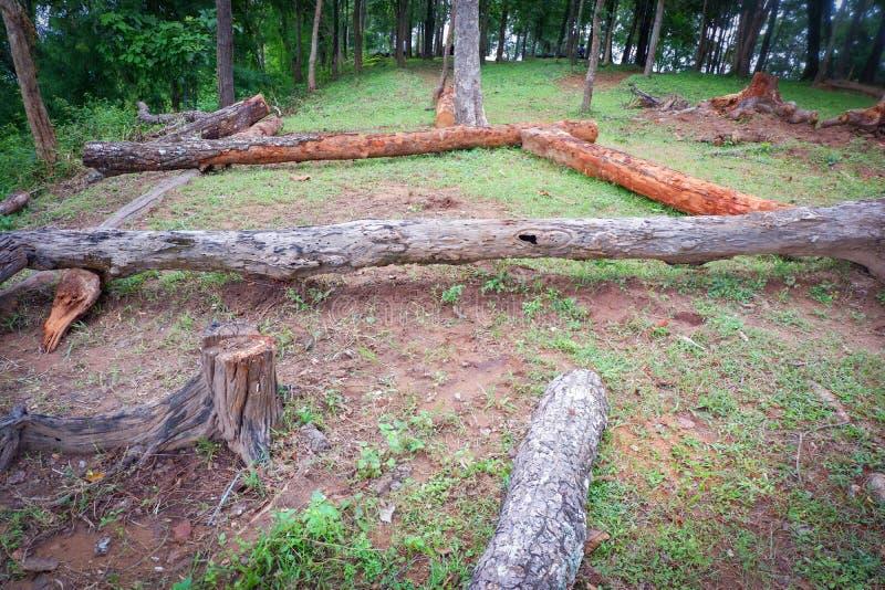 Het bos van de logboekboom royalty-vrije stock foto