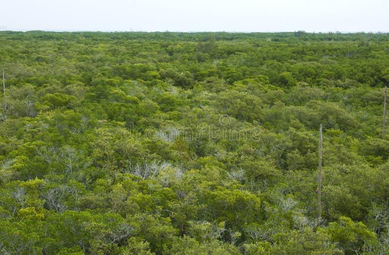 Download Het Bos Van De Mangrove Van Hierboven Stock Foto - Afbeelding bestaande uit bladeren, bovenkanten: 29513464