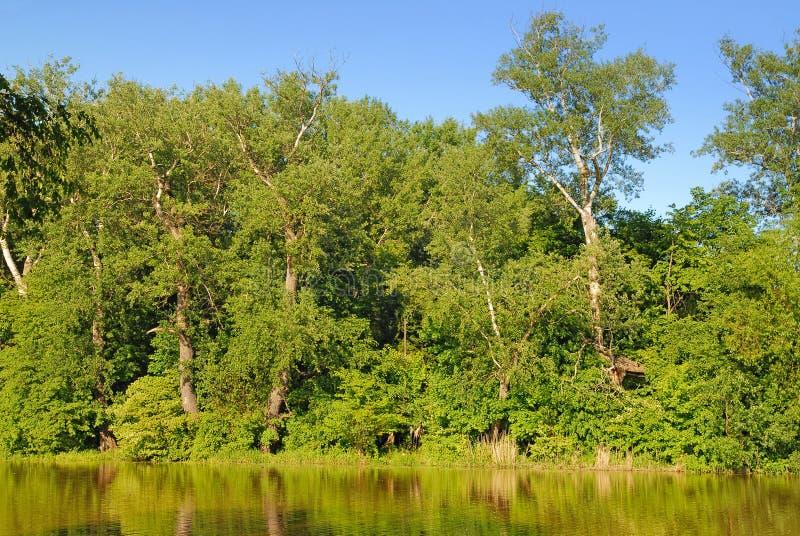 Het bos van de meerkust royalty-vrije stock foto