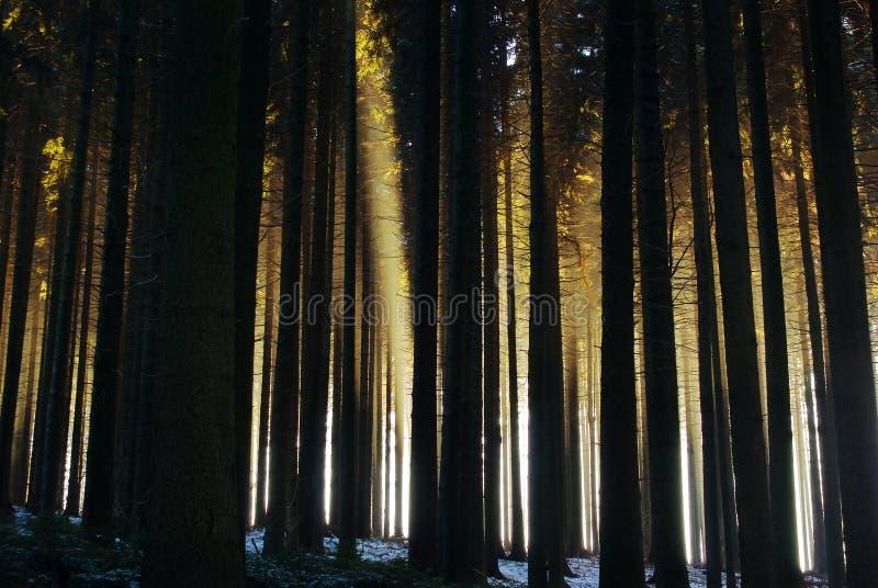Het bos van de mysticus stock afbeelding