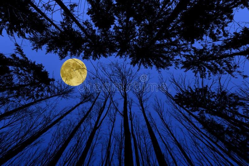 Het bos van de nacht stock afbeelding