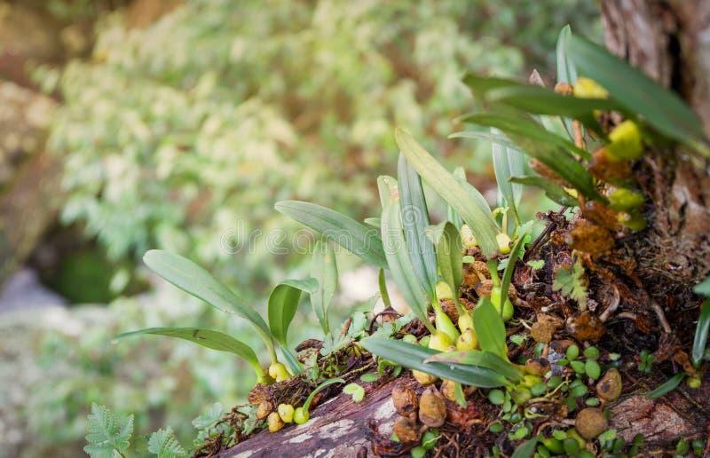 Het bos van de orchideeboom stock afbeelding