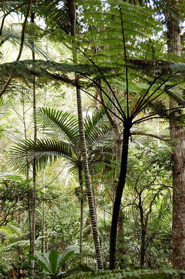 Het bos van de palm en van de varen royalty-vrije stock afbeelding