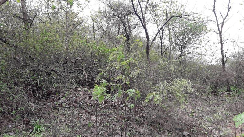 Het bos van de Parneraheuvel in valsad Gujarat India 'beauti van valsad ' stock foto