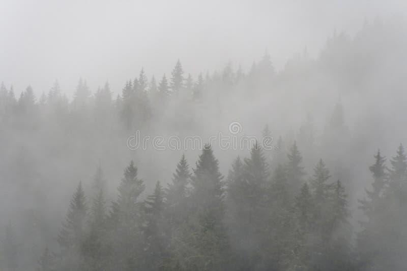 Het bos van de pijnboom in de mist royalty-vrije stock fotografie