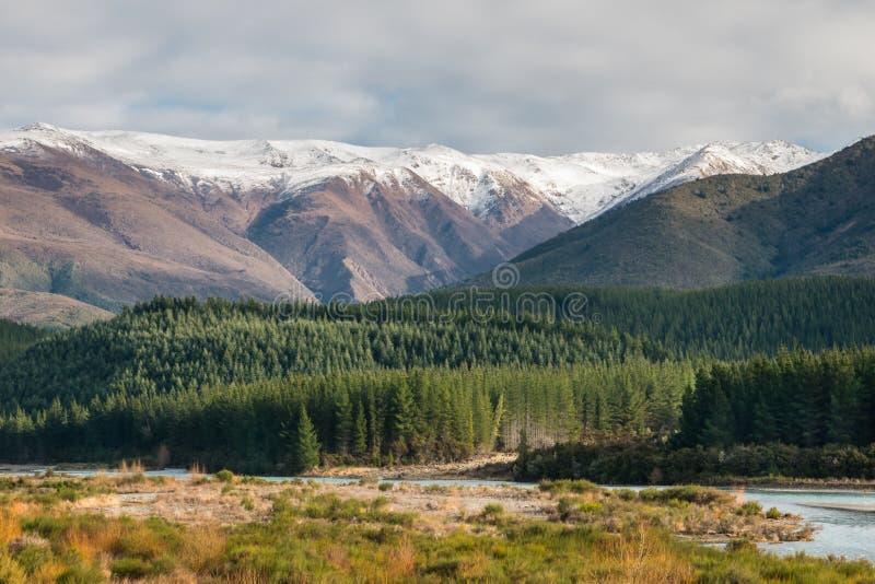 Het bos van de pijnboomboom bij Wairau-rivier, Zuideneiland, Nieuw Zeeland royalty-vrije stock foto's