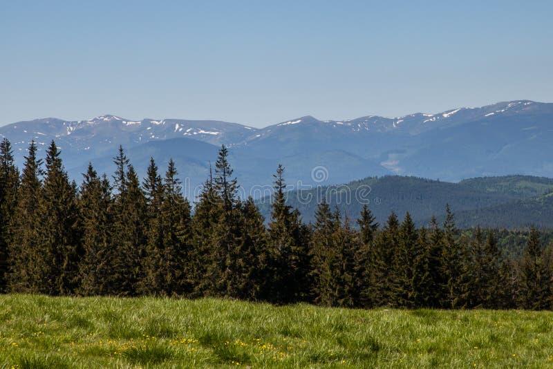 Het Bos van de pijnboomboom in Montains op een Dag van Nice stock foto