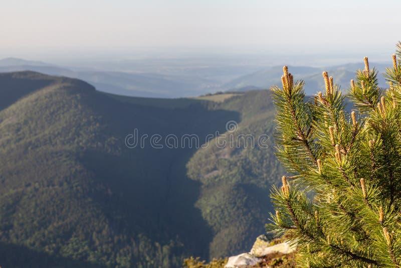 Het Bos van de pijnboomboom in Montains op een Dag van Nice royalty-vrije stock fotografie