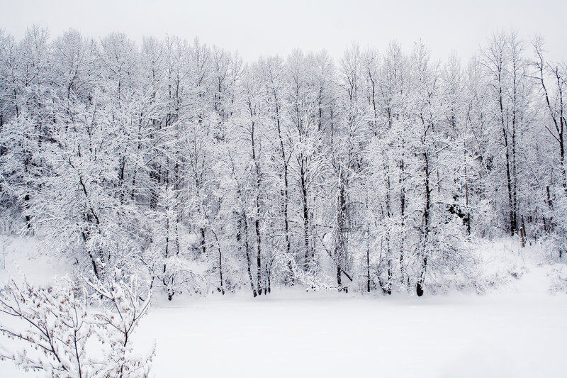 Het bos van de sneeuw stock fotografie