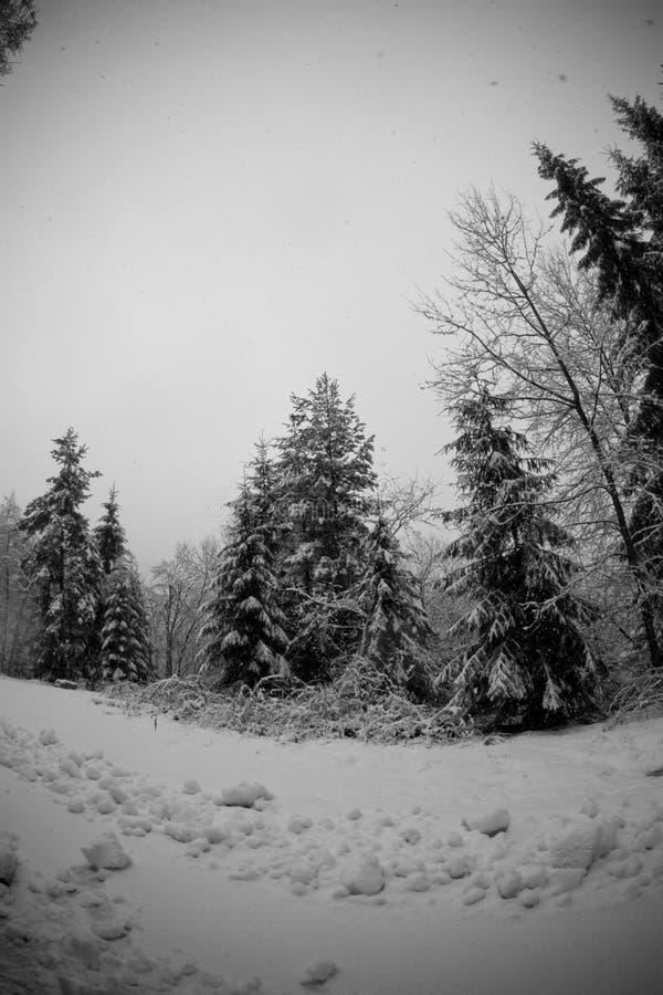 Het bos van de sneeuw stock foto's